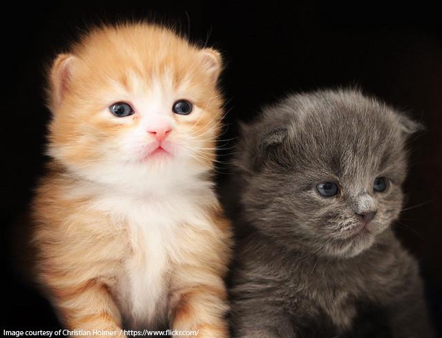 Kattenavn som passer sammen - Kattenavn